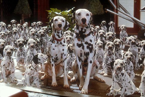 Farmina Pet Foods: Filmes com cães e gatos 1