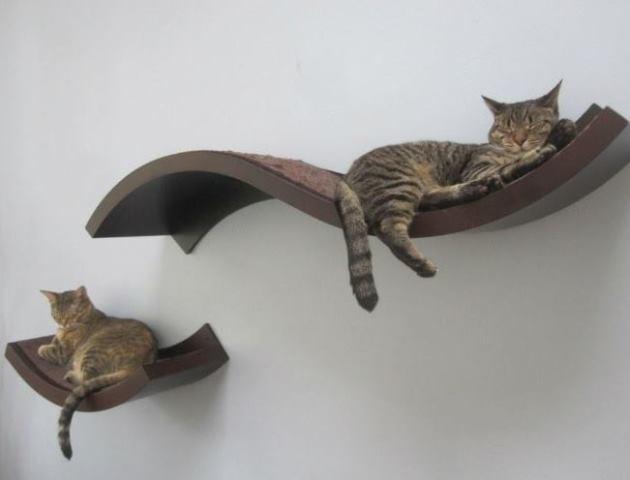 Gatinhos na prateleira