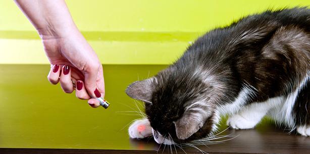 Farmina Pet Foods - Blog de gatos