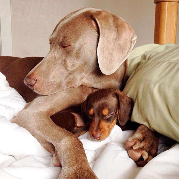 Farmina alimentos para cães e gatos: cães dormindo