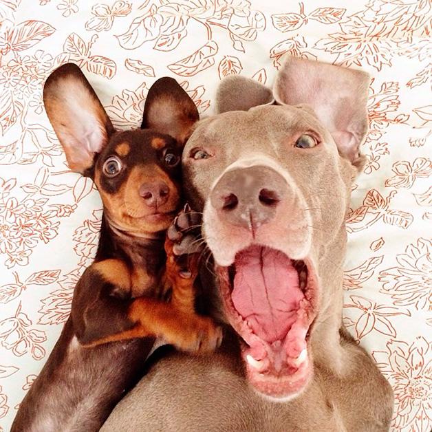 Farmina alimentos para cães e gatos: selfie de cachorro