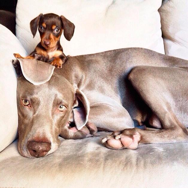 Farmina alimentos para cães e gatos: amizade entre cães