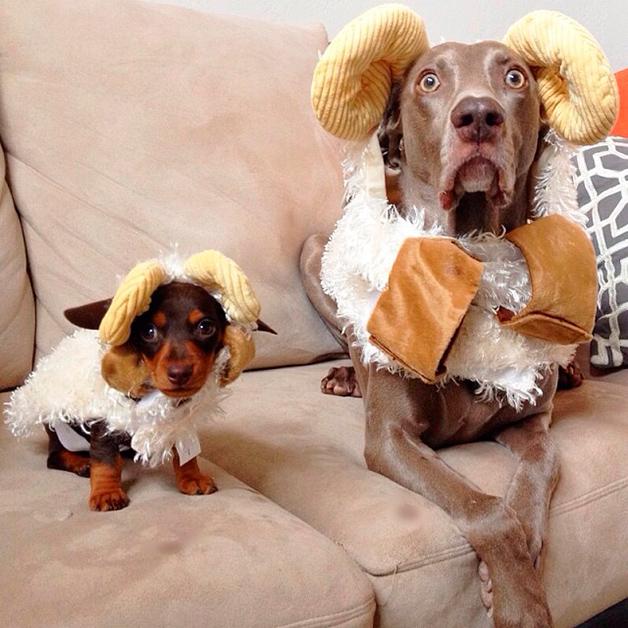 Farmina alimentos para cães e gatos: cachorro com fantasia