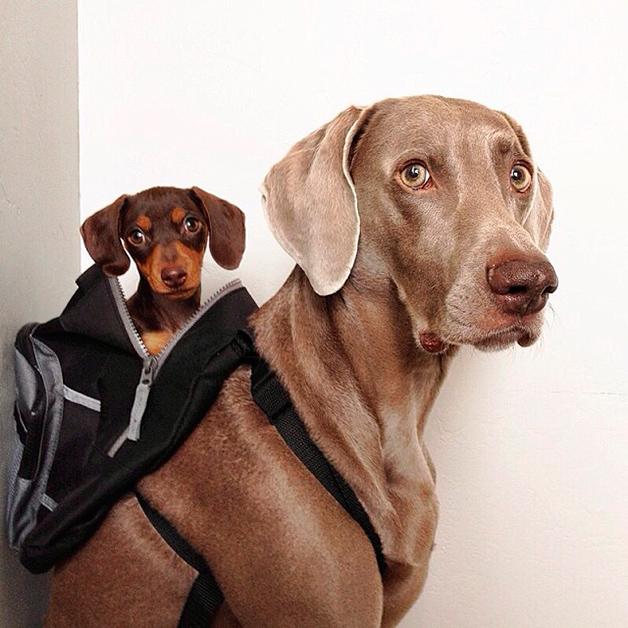 Farmina alimentos para cães e gatos: fotos de cachorro