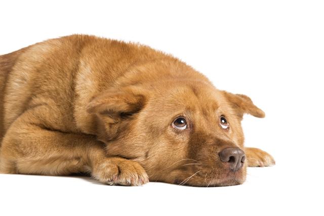 Farmina Pet Foods: animais sentem frio?