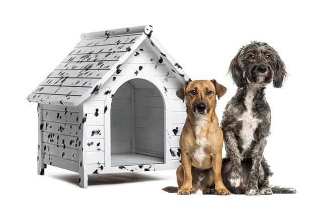 Farmina Pet Foods: dicas de inverno para animais, abrigo