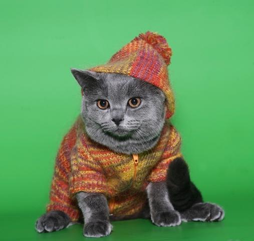 Farmina Pet Foods: dicas de inverno para animais, roupas para gatos