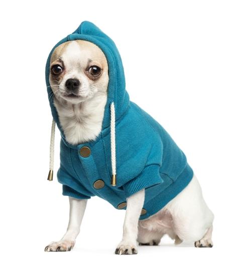 Farmina Pet Foods: dicas de inverno para animais,roupas para cachorros