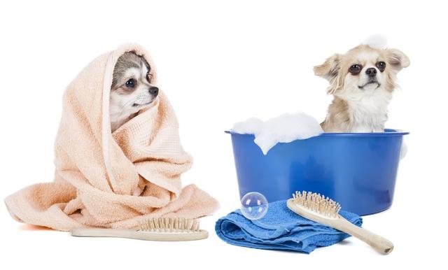 Farmina Pet Foods: dicas de inverno para animais, banho e tosa