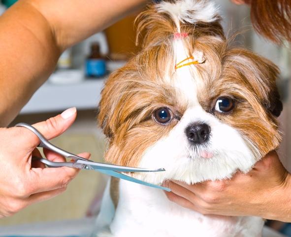 Farmina Pet Foods: dicas de inverno para animais,banho e tosa 2