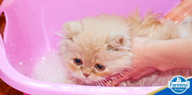Farmina - Banho de gato