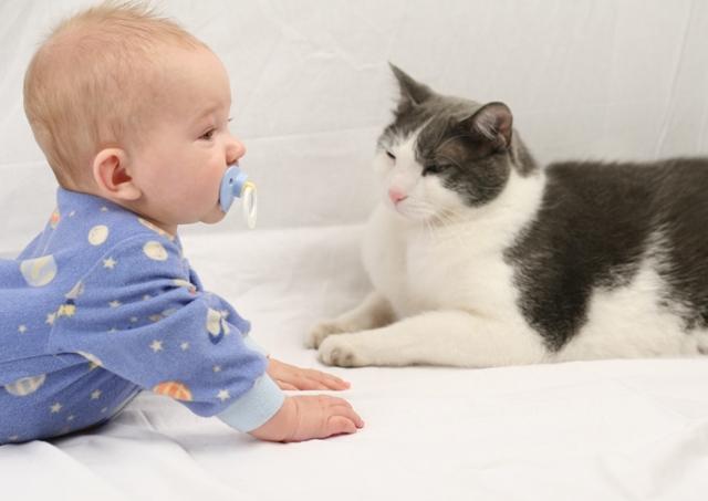 Bebê e gatinho juntos