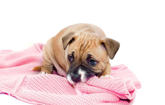 Cãozinho desconfiado