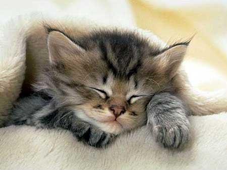 Gatinho dorimindo