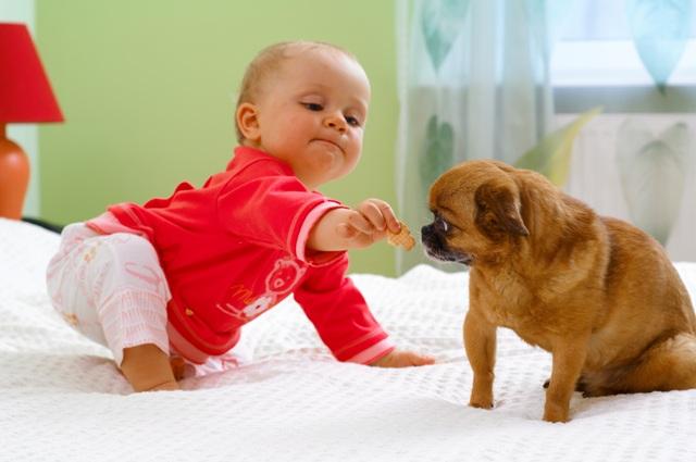 Bebê e cachorrinho