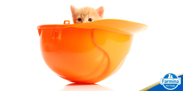 Cuidados com gatos