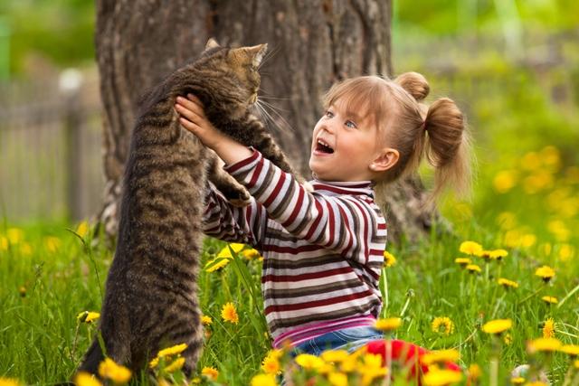 Criança e gatos a convivência