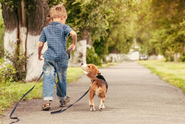 O menino e o cãozinho amigos para sempre