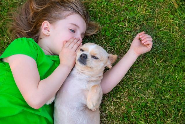 Cães pequenos e dóceis