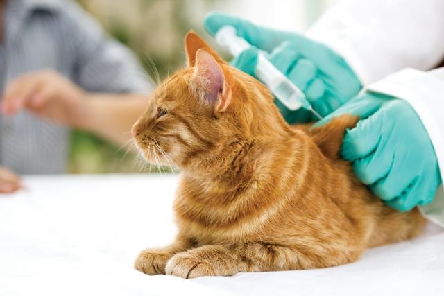 Farmina Pet Foods: vacina contra raiva