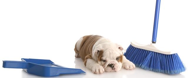 Bulldog - Cachorro fofo