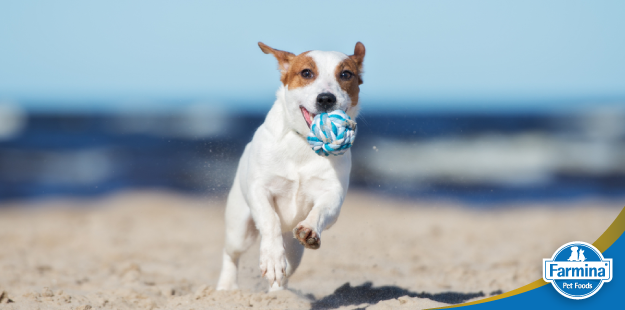 Capa de 'A atividade física pode mudar a vida do seu pet – Saiba como'