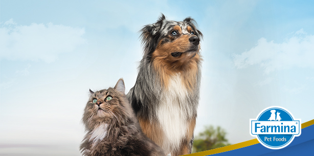 Capa de 'Você sabe como os ancestrais do seu pet se alimentavam?'