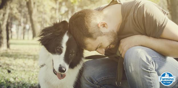 Capa de 'Curiosidades sobre cães: eles sabem quando você está mal'