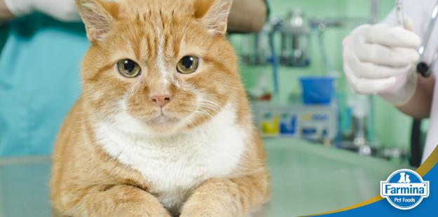Capa de 'O papel da dieta nas doenças do trato urinário dos gatos'
