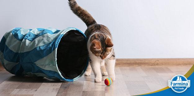 Enriquecimento ambiental para gatos - Como a alimentação interativa pode ajudar