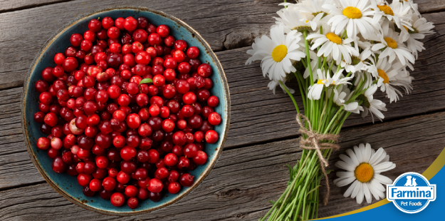 Capa de 'Alimentos funcionais e sua história - o Cranberry e a Camomila'