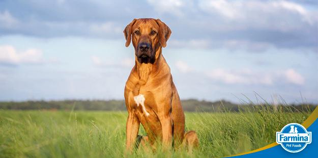 Capa de 'As 7 maiores mentiras sobre cães e gatos'
