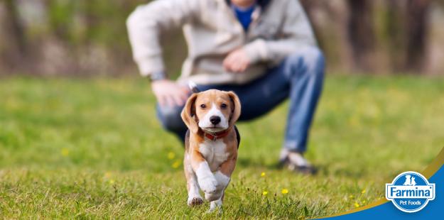 Como educar seu cão corretamente