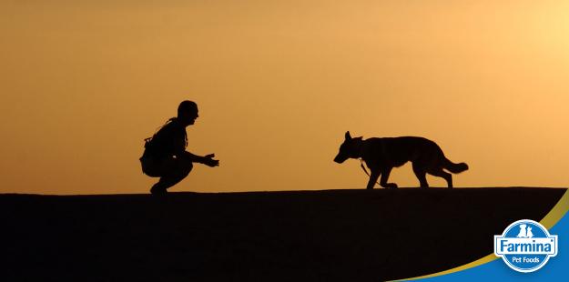 Capa de 'O comportamento natural do cão'