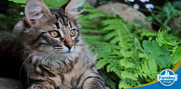 Capa de 'Insuficiência renal em gatos – um guia de tudo que você precisa saber'