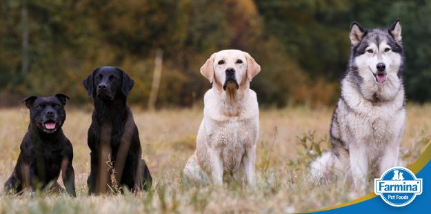 A história das raças de cães
