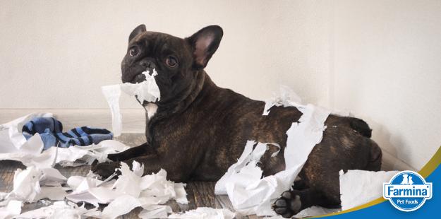Corrigindo problemas comportamentais de cães