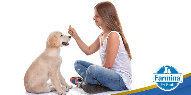 Capa de 'Dicas para adestrar seu cão'