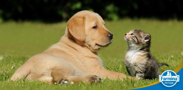 Cachorro pode comer comida de gato? (ou vice-versa)