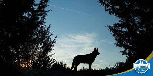 Capa de 'A história dos cães'
