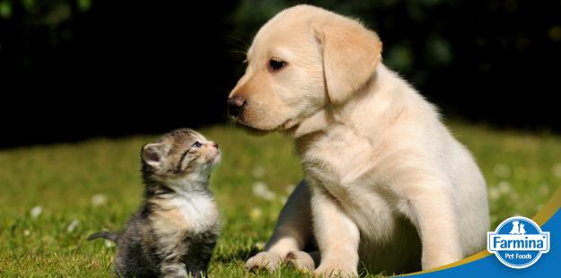 Capa de 'Cuidados básicos com cães filhotes'