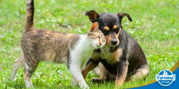 Diabetes em cães e gatos - sintomas, tratamento e prevenção