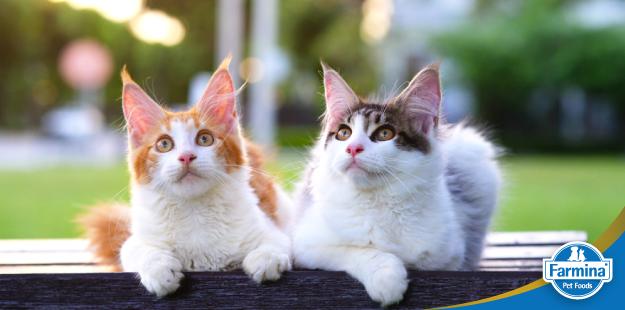 A história das raças de gatos
