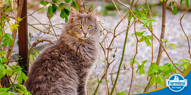 Adotando um gato adulto - dicas e cuidados necessários