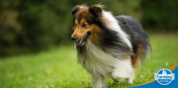 Capa de 'Sete dicas para uma pelagem exuberante em cães e gatos'