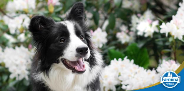 A história de Pickles, o cão que achou a taça da copa do mundo roubada