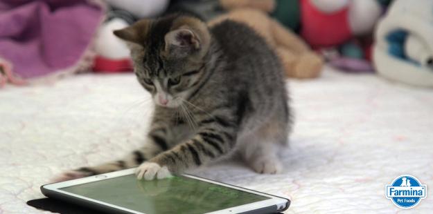 Capa de '6 aplicativos para donos de pets'