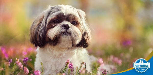 Cálculo urinário em cães - as famosas pedras na bexiga
