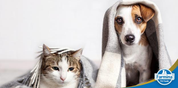Cuidados essenciais com o pet durante o inverno