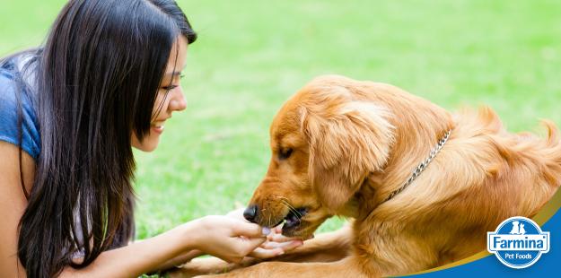 Capa de 'Alimentação de cães: educação à mesa'